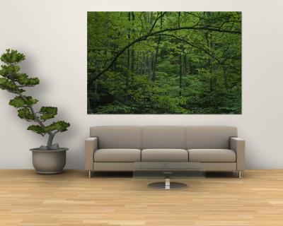 A Lush Green Eastern Woodland View Wall Mural by Bates Littlehales
