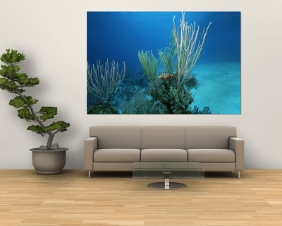 Coral Reef Scene off the Coast of Grand Turk Island Wall Mural by Wolcott Henry
