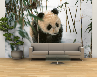 Panda Cub on Snow, Wolong, Sichuan, China Wall Mural – Large by Keren Su