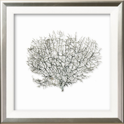 Sea Fan on Linen III Dimensional Product