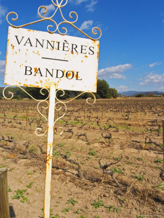 View of the Vineyard, Cinsault and Mourvedre, Chateau Vannieres Photographic Print
