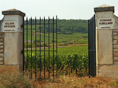 Iron Gate to the Vineyard Clos Pitois, Roger Belland, Santenay, Bourgone, France Photographic Print