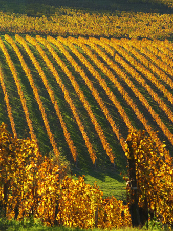 View Over the Vineyards in Bergerac, Chateau Belingard, Bergerac, Dordogne, France Photographic Print