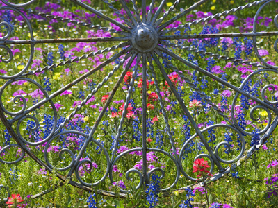 Wheel Gate and Fence with Blue Bonnets, Indian Paint Brush and Phlox, Near Devine, Texas, USA Photographic Print by Darrell Gulin
