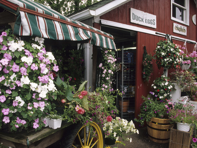 Farm Stand in Red Barn with Flowers, Long Island, New York, USA Photographie
