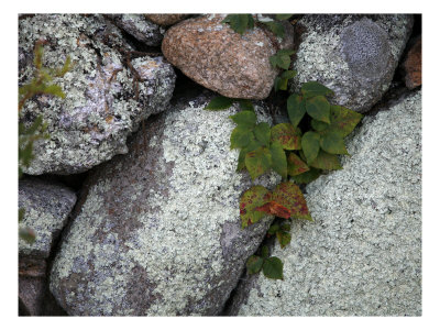 Stones and Vines Photo by Nicole Katano