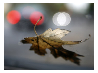 Leaf Reflections Photo by Nicole Katano