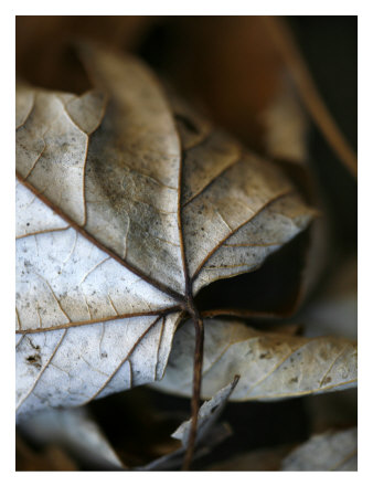 Fall Leaves IV Photo by Nicole Katano