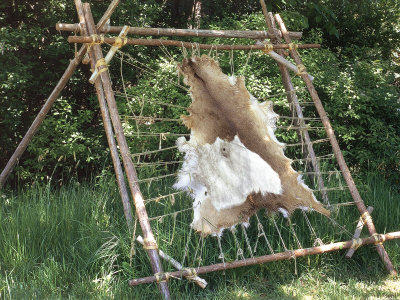 Deer Hide Stretched on Sapling Frame to Be Scraped and Tanned, Heritage Hill, Green Bay, Wisconsin Photographic Print