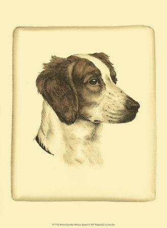 Danchin Brittany Spaniel Prints by  Danchin