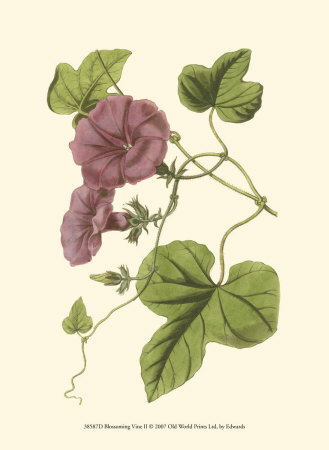 Blossoming Vine II Art Print