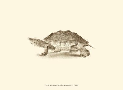 Sepia Turtle II Art by J. H. Richard