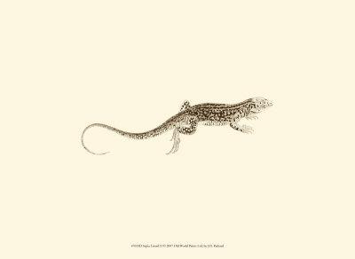 Sepia Lizard II Poster by J. H. Richard