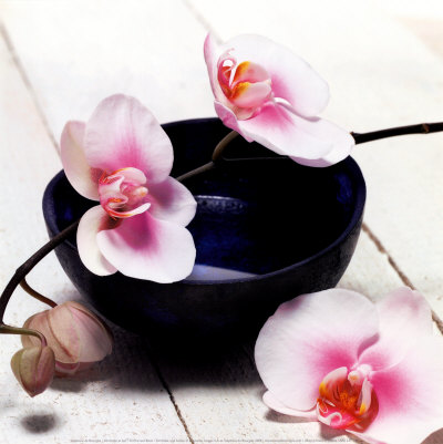 Orchid in a Bowl Art Print