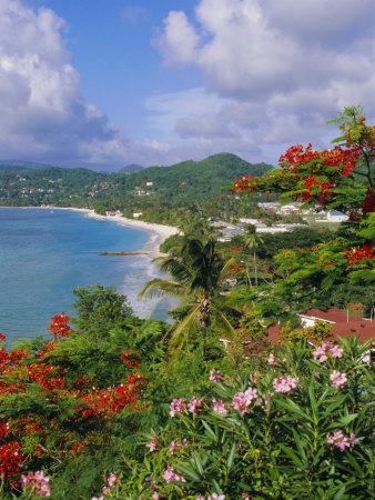 Grand Anse Beach, Grenada, Caribbean, West Indies Photographic Print by Robert Harding