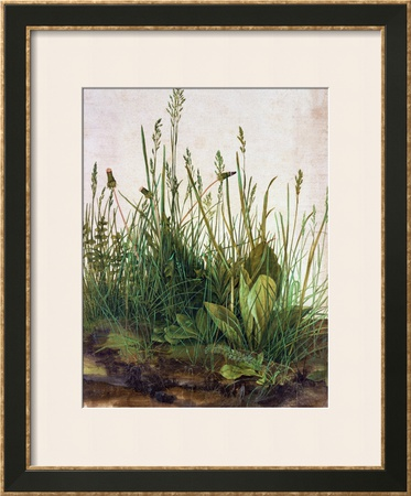 Large Piece of Turf, 1503 Framed Giclee Print by Albrecht Dürer