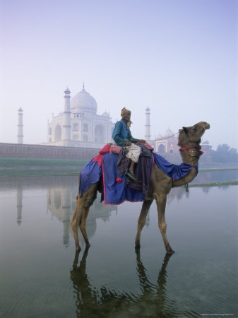 Camel and Rider in Front of the Taj Mahal and Yamuna River, Taj Mahal, Uttar Pradesh State, India Photographic Print by Gavin Hellier