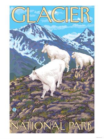 Mountain Goats Scene, Glacier National Park, Montana Affischer av  Lantern Press