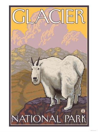 Mountain Goat, Glacier National Park, Montana Affischer av  Lantern Press