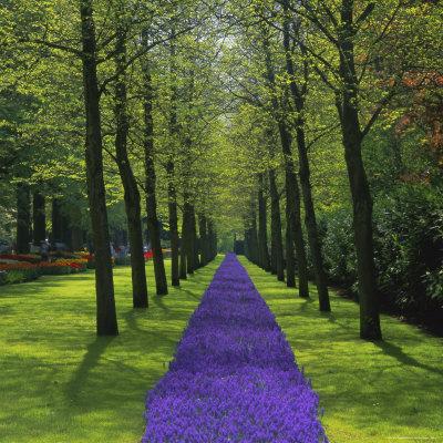 Keukenhof Gardens, Near Amsterdam, Holland (The Netherlands), Europe Photographic Print by Roy Rainford