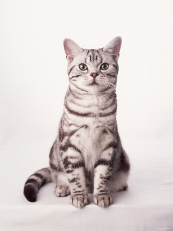 Finnegan the Cat I Photo