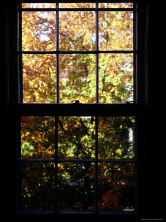 Autumn View Out of a Wooden Pane Window, Washington, D.C. Photographic Print by Stacy Gold