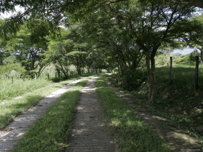 Brick and Grass Path, Mexico Photographic Print by Gina Martin