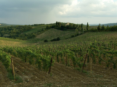 Chianti Vineyards in Tuscany, Italy Photographic Print by Todd Gipstein