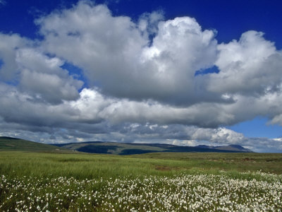 Iceland: Cumulus Louds over Green Landscape with White Wildflowers Photographic Print by  Brimberg & Coulson