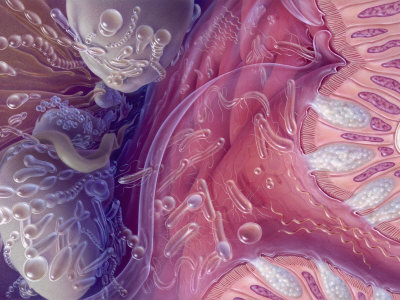 Bacteria of Human Intestinal Tract, Painted by Jane Hurd Photographic Print by Jane Hurd
