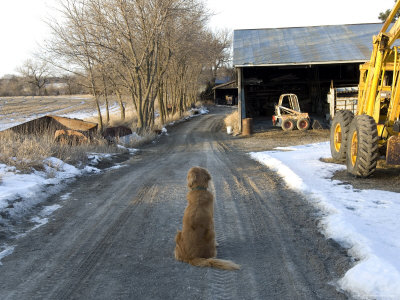 Dog Sits on a Gravel Road at a Sawmill Farm in Cortland, Nebraska Photographic Print by Joel Sartore