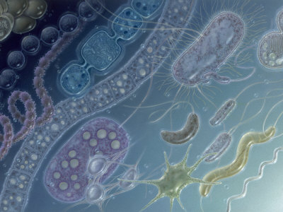 Painting of 17 Types of Bacteria by Jane Hurd Photographic Print by Jane Hurd
