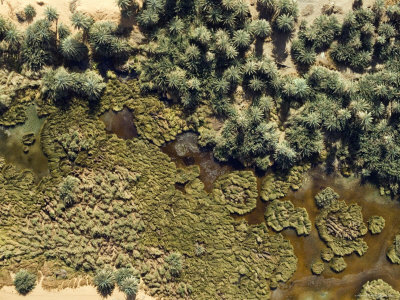 This Lush Wadi Helps Support the Population Living in Djado, Niger Fotografisk tryk af Michael Fay