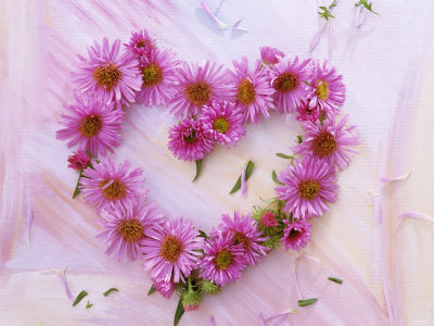 Heart of Pink Asters Photographic Print by Friedrich Strauss