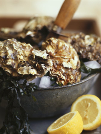Fresh Oysters and Lemon Photographic Print by Debi Treloar