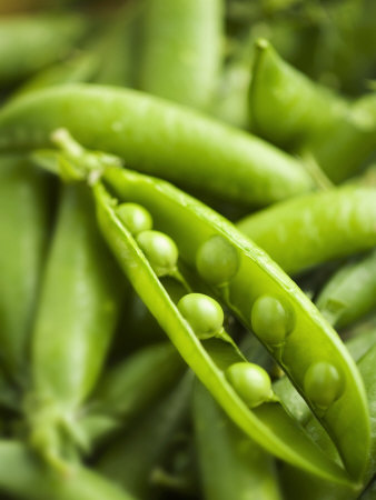 Pea Pods, One Open Photographic Print by Greg Elms