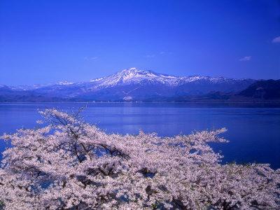Cerry Blossoms and Lake Tazawa Photographic Print