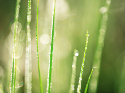 Morning Dew on Grass Leaves Fotografie-Druck