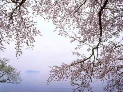 Cherry Blossoms and Lake Biwa Fotografie-Druck