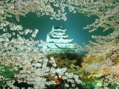 Night View of Osaka Castle & Cherry Blossoms, Japan Photographic Print