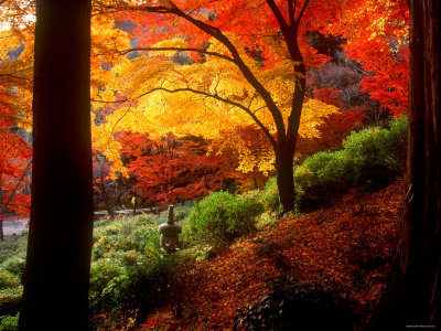 Garden of Bishamon do Temple outdoors nature fall autumn landscape photo; red, orange, yellow, brown green colors