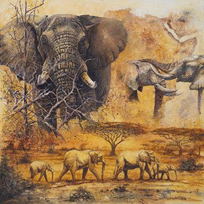 Safari II Prints by Peter Blackwell