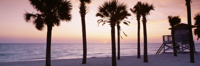 Palm Trees and a Lifeguard Hut on Lido Beach, Gulf of Mexico, St Armands Key, Florida, USA Photographic Print by  Panoramic Images