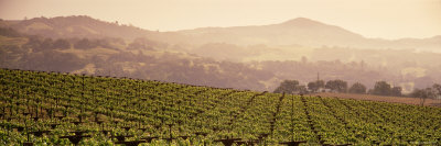 Mountains in Front of Vineyards, Asti, California, USA Photographic Print by  Panoramic Images