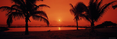 Silhouette of Palm Trees on the Beach at Dusk, Lydgate Park, Kauai, Hawaii, USA Photographic Print by  Panoramic Images