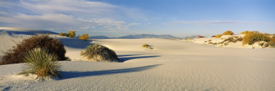 Desert Plants in White Sands National Monument, New Mexico, USA Photographic Print by  Panoramic Images