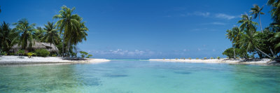 Palm Trees on the Beach, Tikehau, French Polynesia Photographic Print by  Panoramic Images