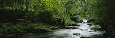 River Flowing in the Forest, Aberfeldy, Perthshire, Scotland Photographic Print by  Panoramic Images