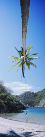 Rope Swing Hanging from a Palm Tree, Tortuga, Costa Rica Photographie