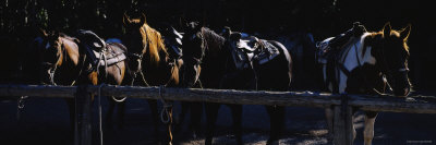 Five Horses Standing in a Row, US Glacier National Park, Montana, USA Photographic Print by  Panoramic Images